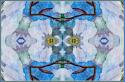 Dogwood Kaleidoscope (thumbnail)