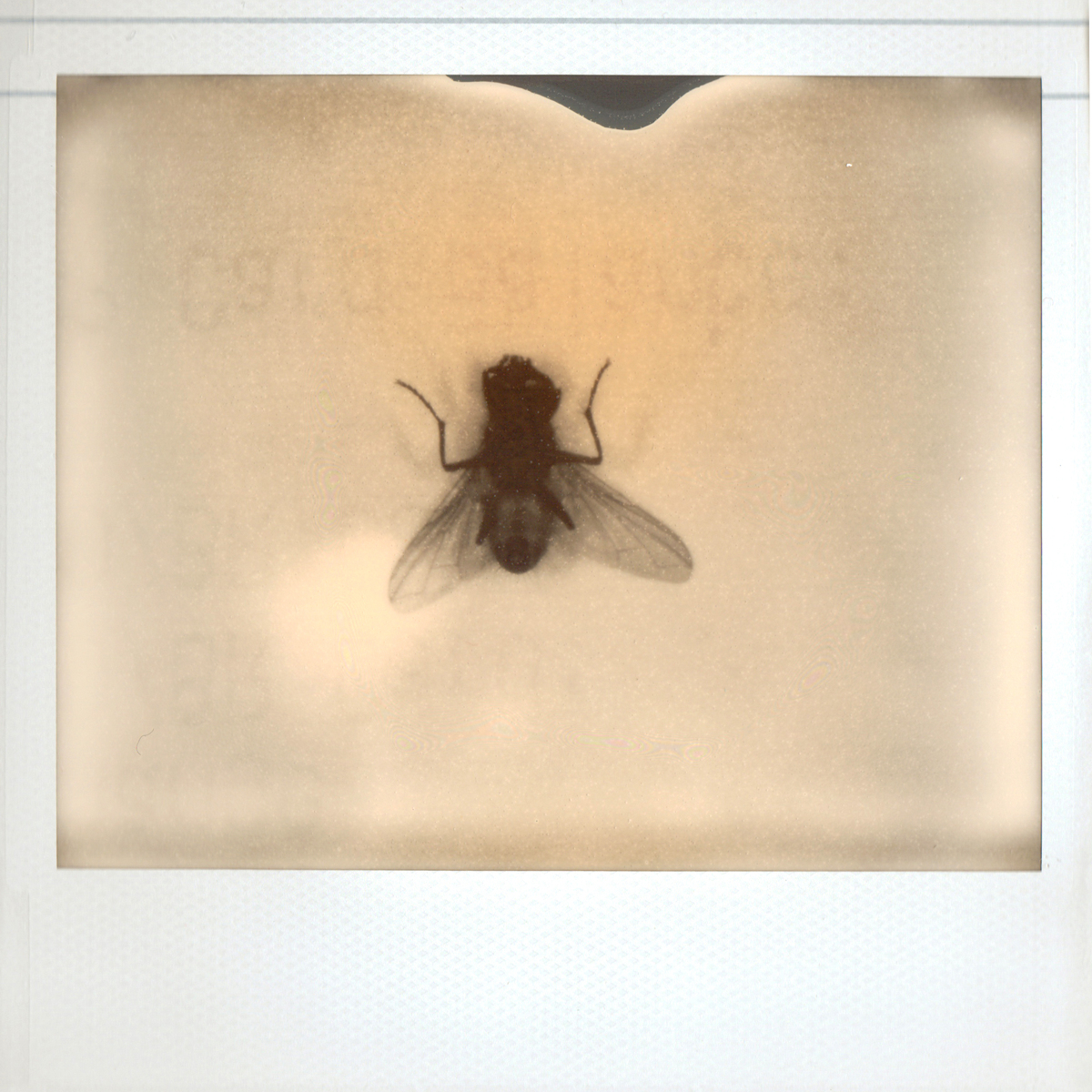 Fly (large view)