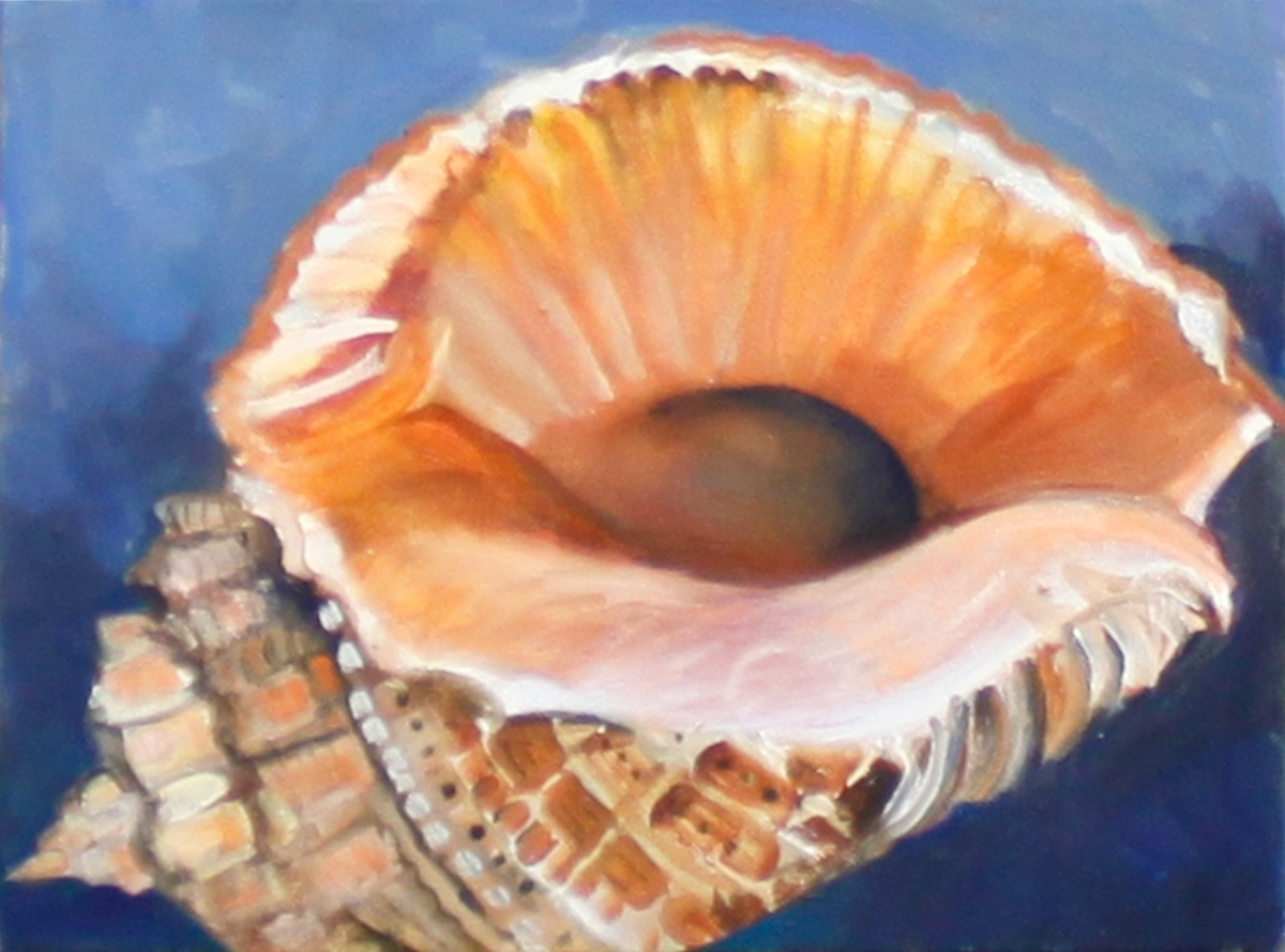 New Shell (large view)