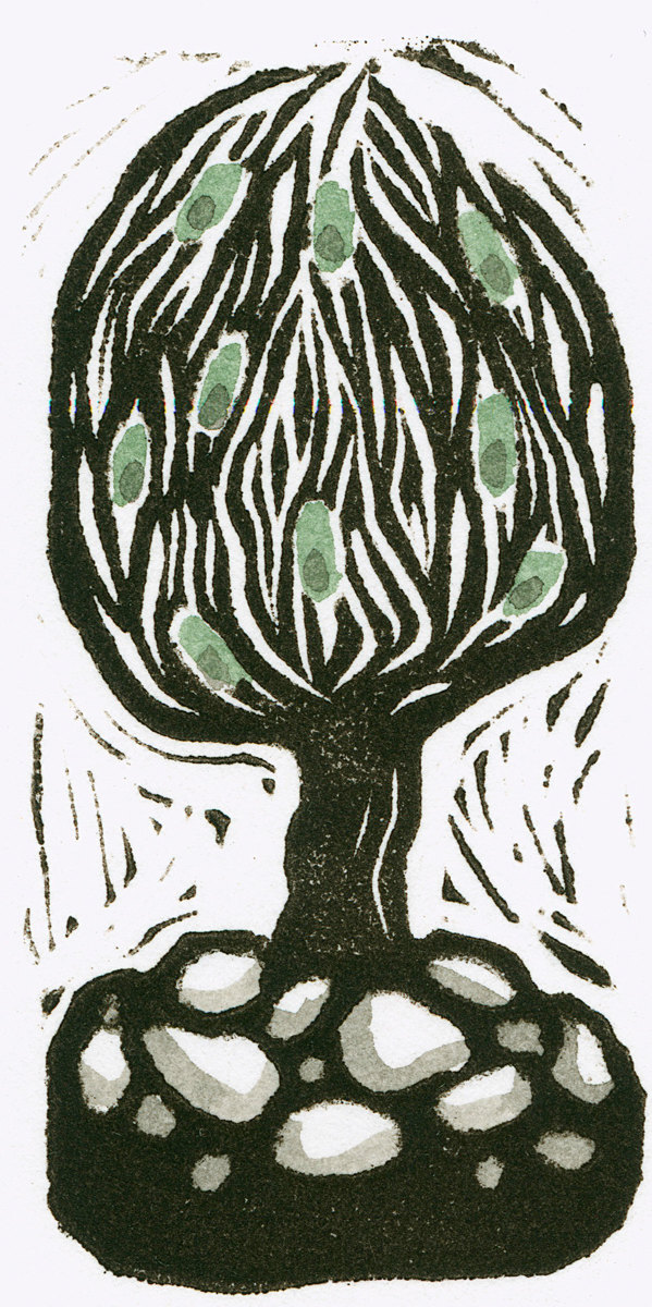 Olive Tree (large view)