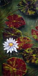 White Lilly (thumbnail)