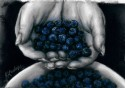 hands holding blueberries (thumbnail)