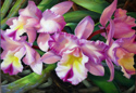 For the Love of Orchids (thumbnail)