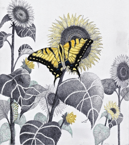 Western Tiger Swallowtail & Sunflowers