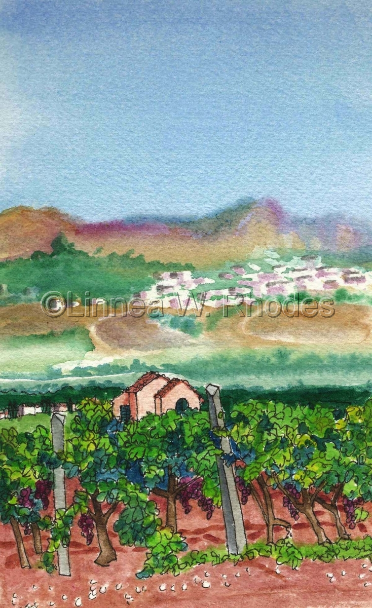 Planeta Vineyard by Linnea W. Rhodes (large view)
