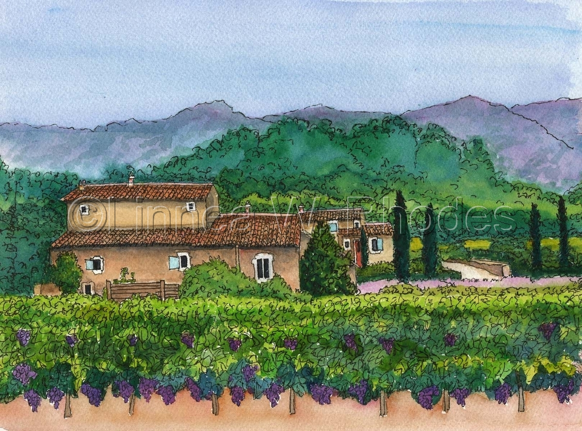 Vineyard II (large view)
