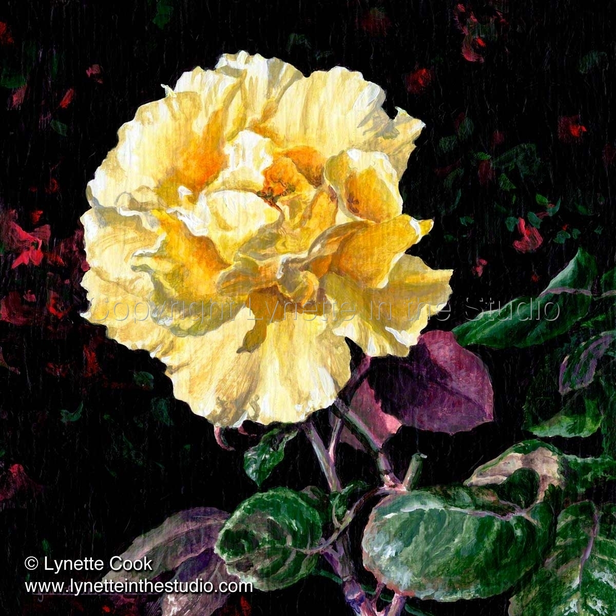 Yellow Rose (large view)