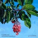 Hanging Jewels (thumbnail)