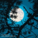 Moonglow (thumbnail)