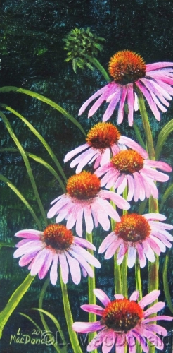 Purple Coneflowers (large view)