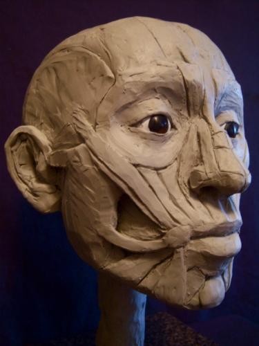 Facial Ecorche