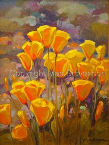 Mexican Poppies (large view)
