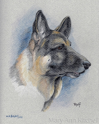 Colored pencil dog portrait:  Rolf