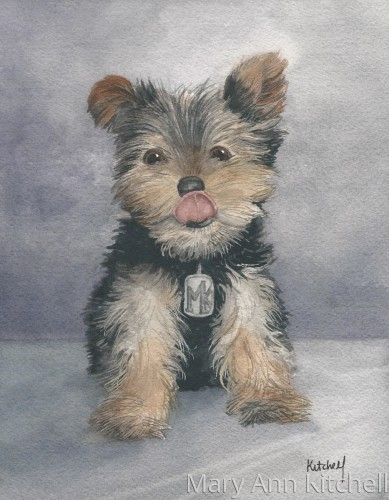 Watercolor pet portrait:  Yummy Puppy by KitchellStudio:  Custom House and Pet Portraits by Maryann Kitchell