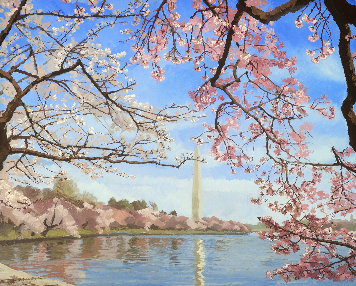 Cherry Blossoms At The Tidal Basin, 2011 (large view)
