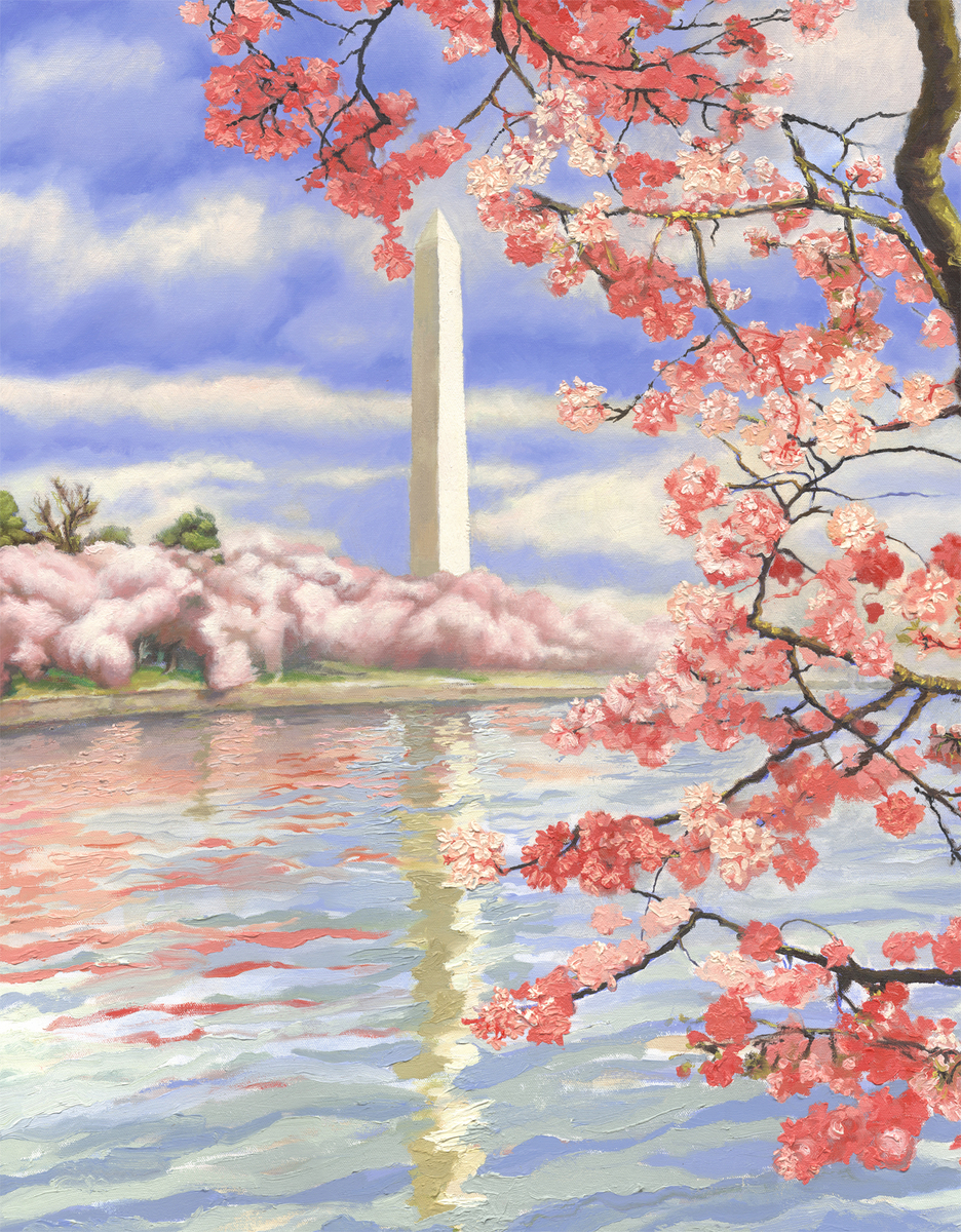 Cherry Blossoms On The Tidal Basin (large view)