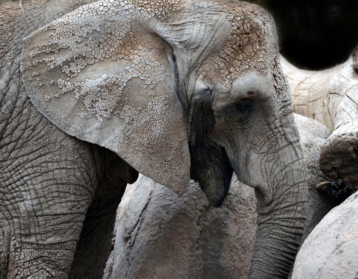 Elephant (large view)