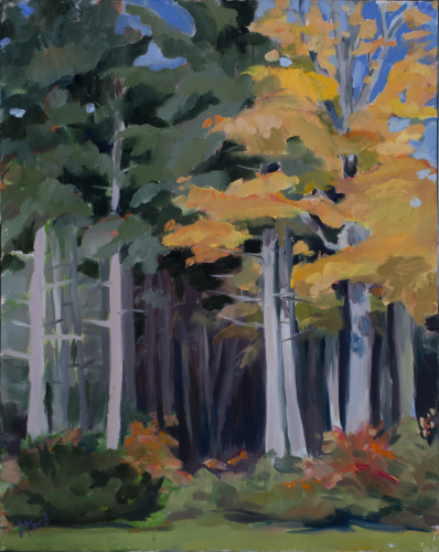 White Pine and Sugar Maples