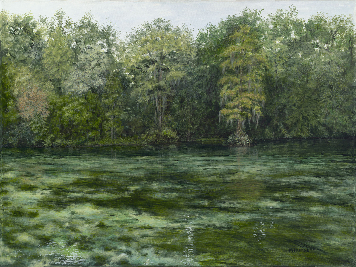 Wakulla Springs  Waterway (large view)