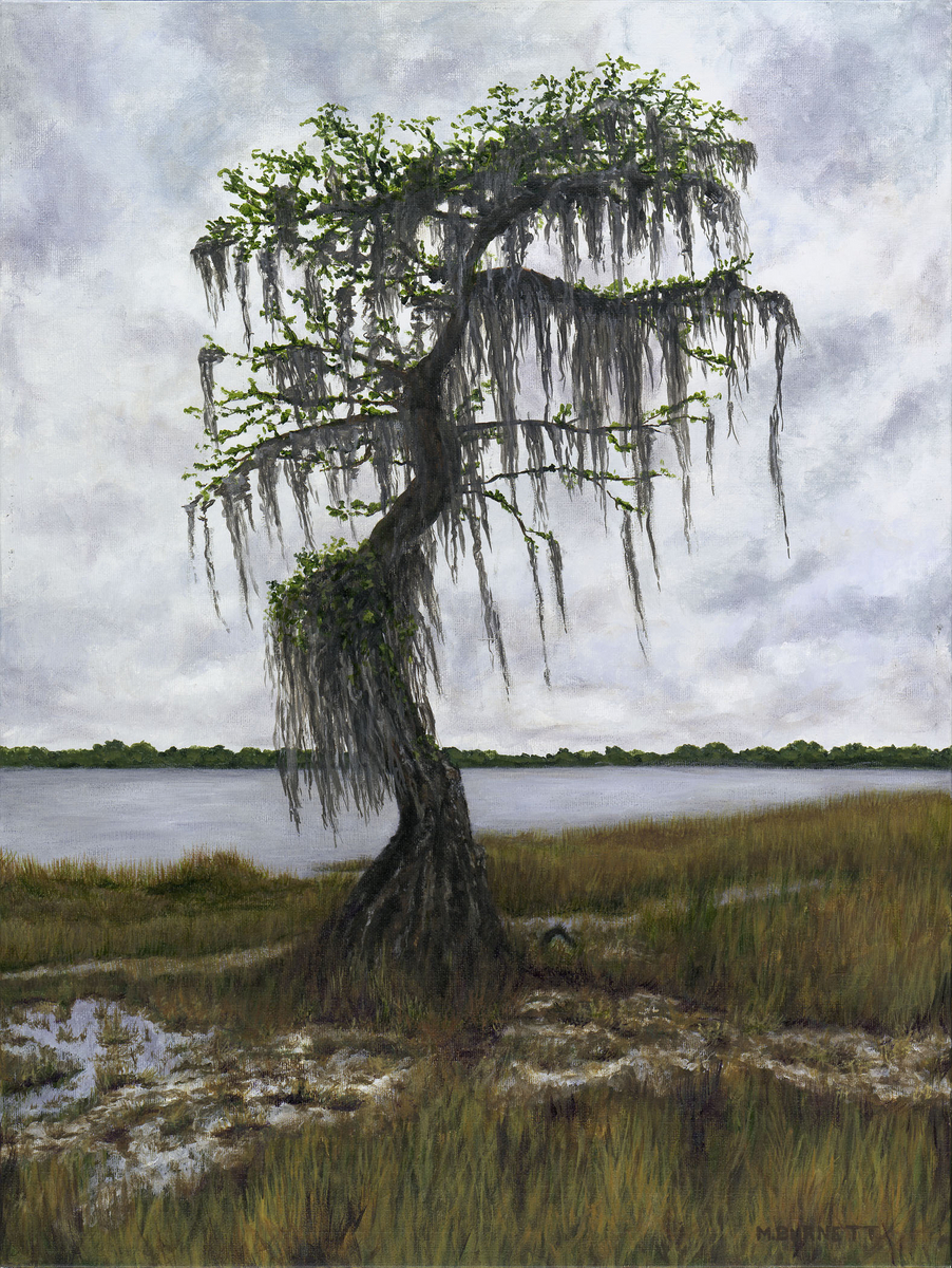 Old Cypress at Ocean Pond (large view)