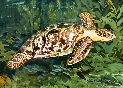 Hawksbill Sea Turtle by MARIA WINKLER