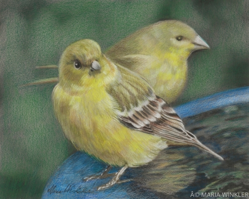 Two Goldfinches