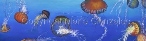 Jellyfish (thumbnail)