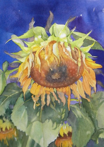 Summer's Last Sunflower by Marilyn Ventresca DiChiara