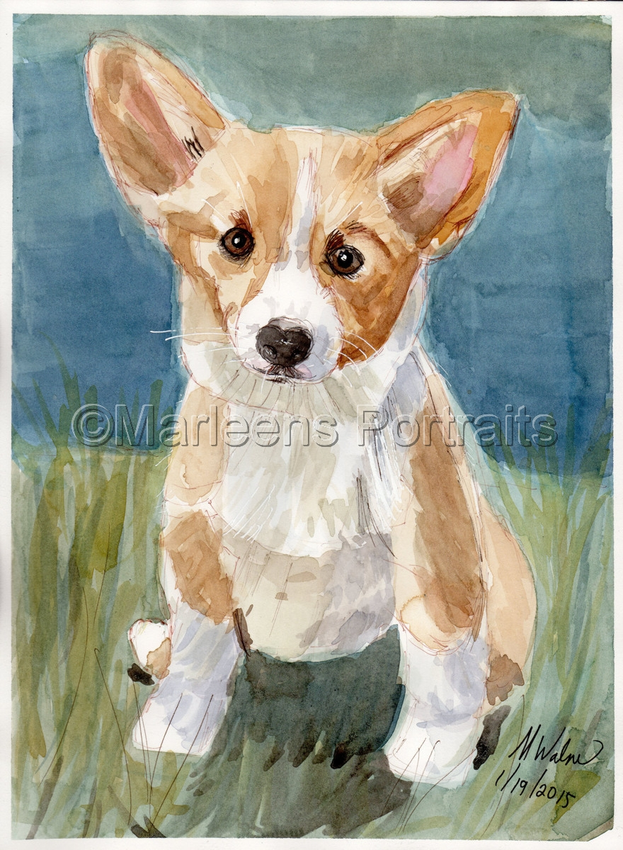 Corgi  (large view)