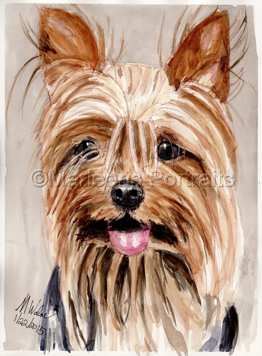 Yorkie (large view)