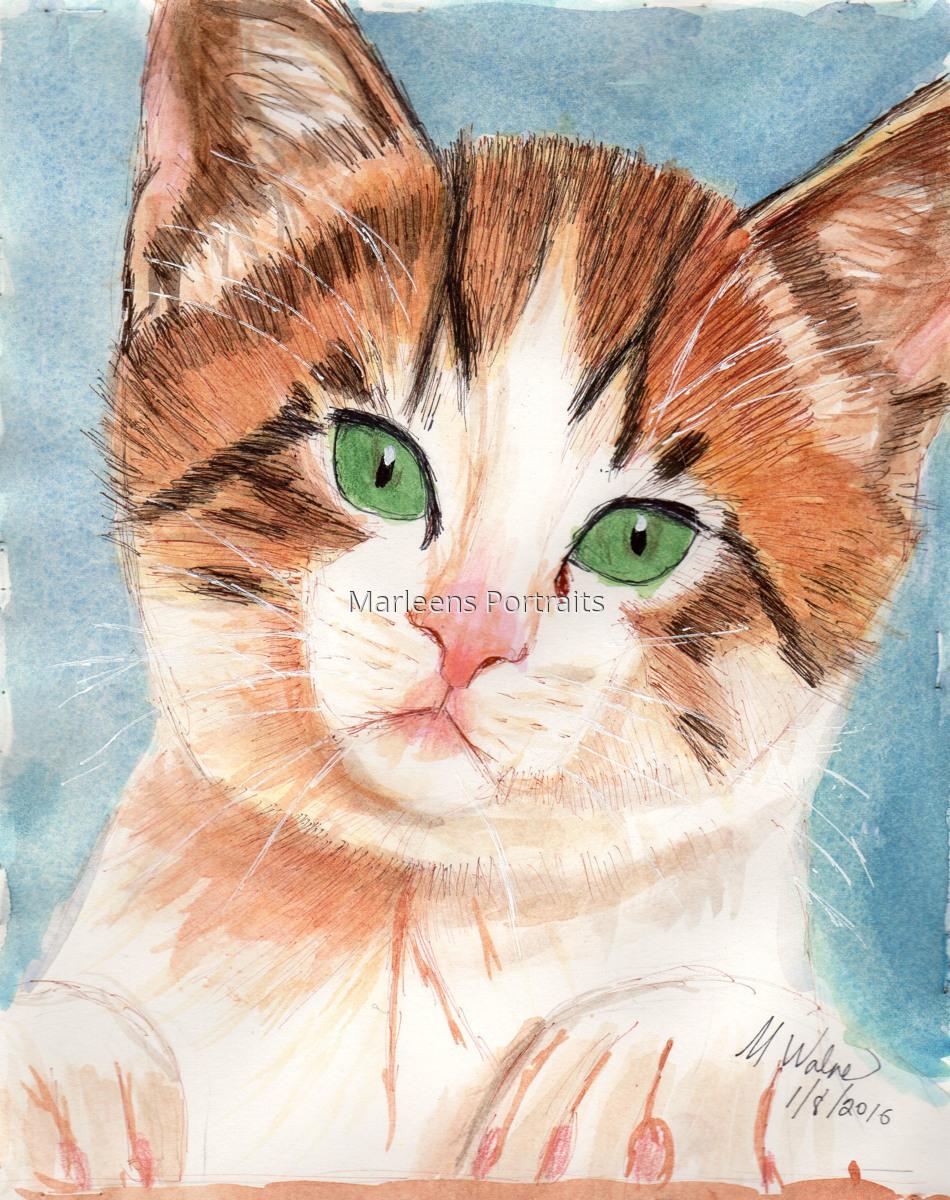 Bold Kitten (large view)
