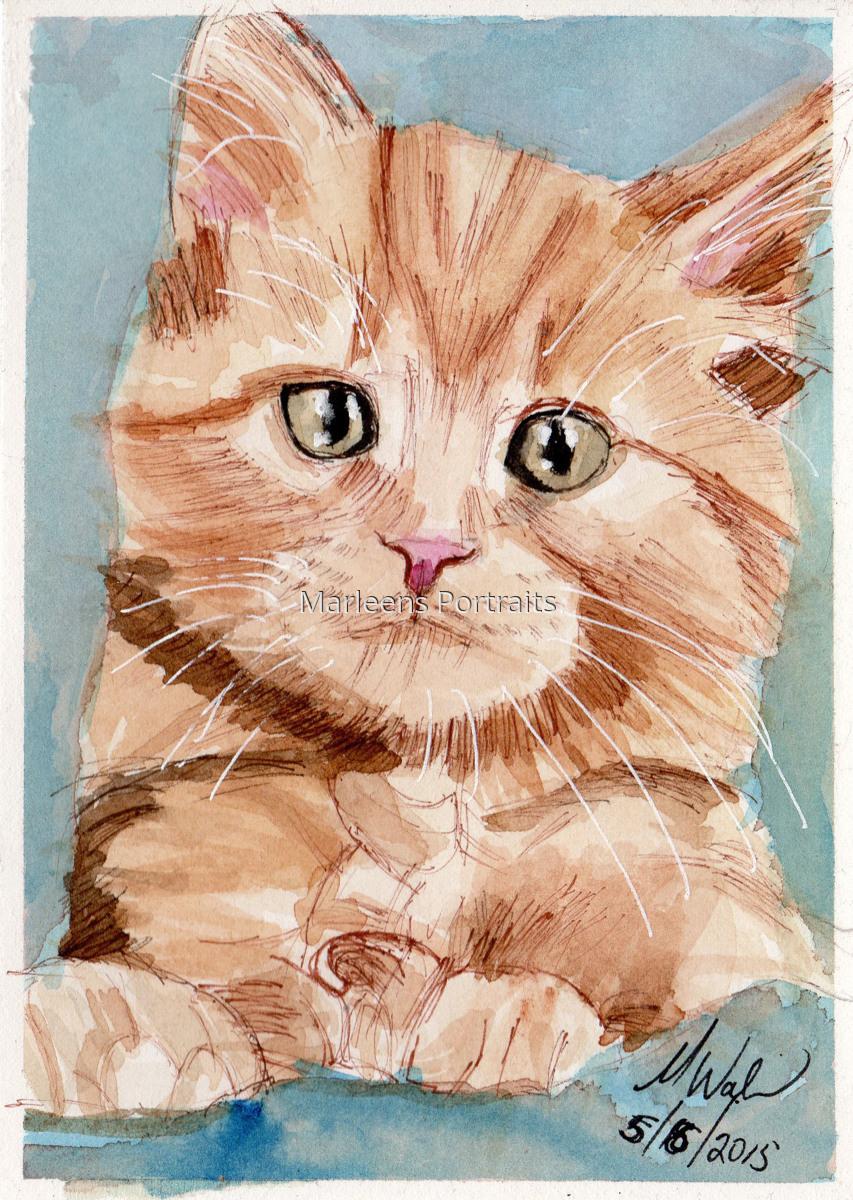 Kitten (large view)