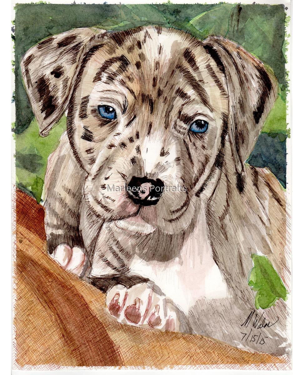 Pitbull Puppy (large view)