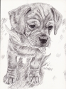 Puppy with Scarf (thumbnail)