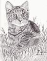 Cat with Ribbon (thumbnail)