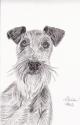 Irish Terrier (thumbnail)