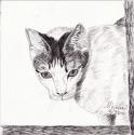 White Cat (thumbnail)