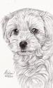 Cute Puppy (thumbnail)