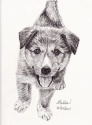 Friendly Puppy (thumbnail)