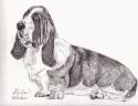Bassett Hound (thumbnail)