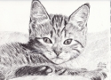Baby Kitty (thumbnail)