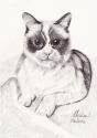 Cat on Sheets (thumbnail)
