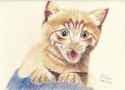 Yellow Kitty (thumbnail)