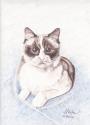 Brown Eyed Cat (thumbnail)