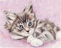 Blue Eyed Kitten (thumbnail)