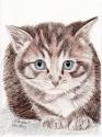 Watchful  Kitty (thumbnail)