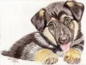 German Shepherd Puppy (thumbnail)