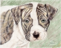 Pit Bull Puppy (thumbnail)