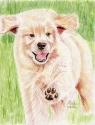 Golden Retriever Puppy (thumbnail)