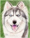 Siberian Husky (thumbnail)